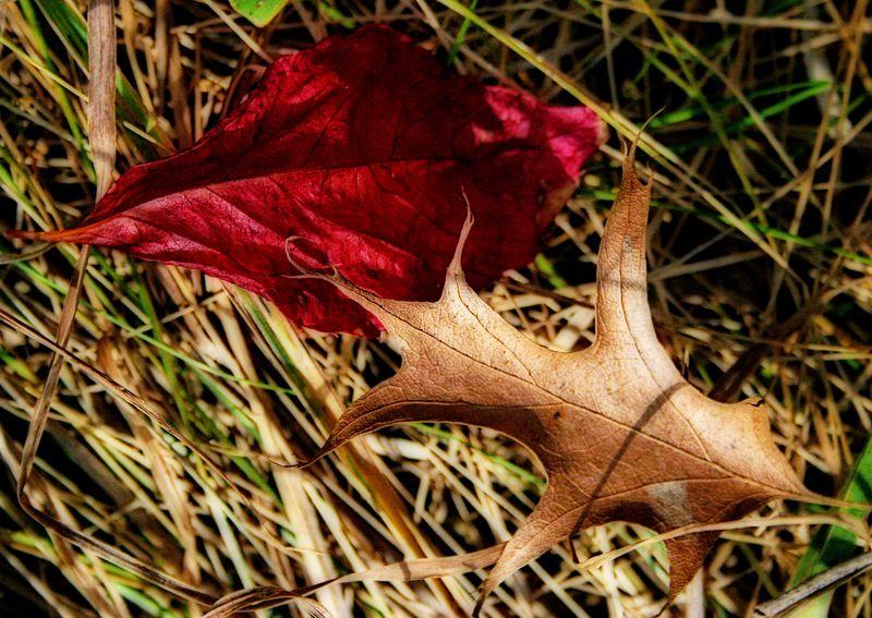 LeafyLove1