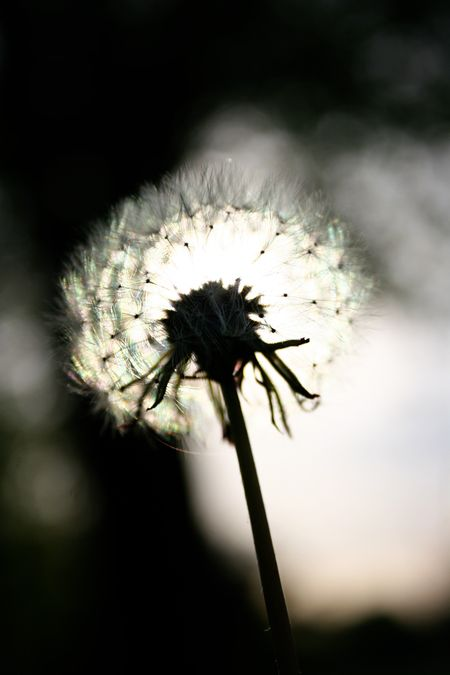 26 Make A Wish