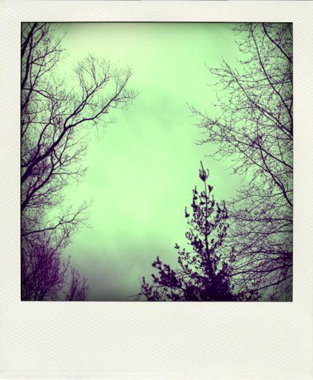 RainyDay-pola